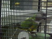 we have several small birds for adoption tiels 75.00pr