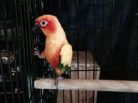 I have a couple of birds that I want to sell due to
