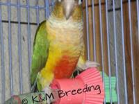 I have several birds I am selling - their prices are in