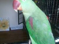 have a 6 yr old male eclectus and a 2 yr old female