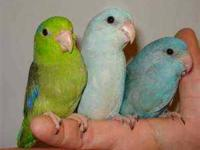 Birds & Pet Supplies! Posted: Thursday, January 19,