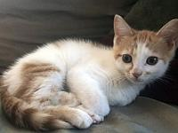 Biscuit's story Description: Biscuit is silky soft with