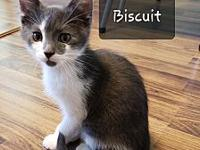 Biscuit's story The adoption fee is $85.00 with an
