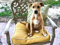 Biscuit is a 4 month old female Terrier mix. She is one