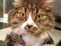 Bisko's story Bisko Age: 3 years old DSH/Neutered Male