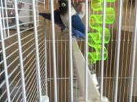 Birds Lover,$45.00 cada uno o lapareja con jaula y nido