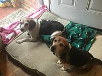 My story Hi, Im Bitsy. My foster mom calls me Bits