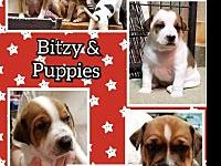 Bitzy's story Bitzy is a sweet but shy girl who we
