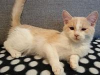 My story If you are interested in adopting this cat,