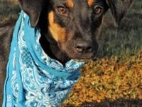 Black and Tan Coonhound - Trixie:$40 Adoption