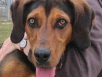 Black and Tan Coonhound - Chief -- Video - Extra Large