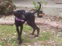 Black and Tan Coonhound - Dutchess - Large - Baby -
