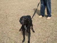 Black and Tan Coonhound - Kiki - Medium - Adult -