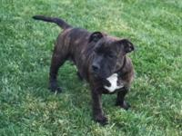 Hey folks I've got a very nice black brindle female