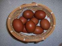 I have several young pullets available, ages 6 to 10