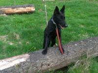 I have a great black german shepherd dog for adoption.