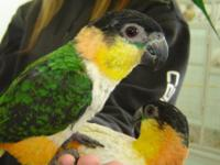 These cute and fun birds make great pets for the