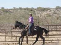 THIS MARE IS A FINISHED HEEL HORSE. 7 YRS OLD, SOUND,