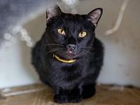 Black Jack's story Black Jack is an adult male cat with