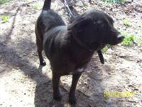 Black Labrador Retriever - Jill - Small - Adult -