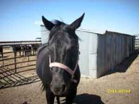 Black mare for sale,,, 9 yr old, call,,,. price negot