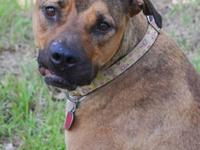 Black Mouth Cur - Bethany - Large - Adult - Female -