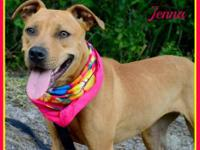 Black Mouth Cur - Jenna - Large - Young - Female - Dog