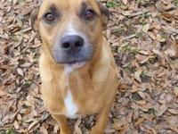 Black Mouth Cur - Survivor - Medium - Baby - Male -