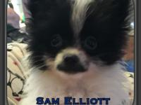 Sam Elliott is a 9 week old adorable tiny boy. Full of