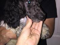 ** Updated -10/02/15** We have 1 female black parti