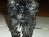 Hi! My name is Archie! I am a gorgeous, black, little