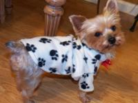 What a beautiful piece of clothing for your pet's