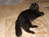 Blackie's story Blackie is a foundling that was a stray