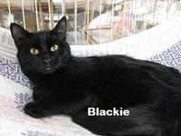 Blackie's story Blackie, sister to Silver Tip, is