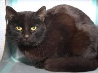 Blackie's story Carla is a pretty little cat with sleek