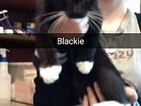 Blackie's story Blackie has been with us since July