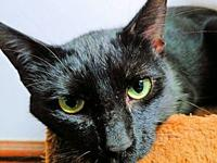 Blackie's story Blackie is a male black cat, born on