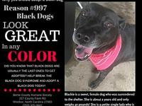 Blackie's story Blackie is a sweet, female dog who was