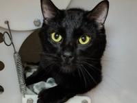 Blackie - Petsmart Kenosha!'s story Come meet this