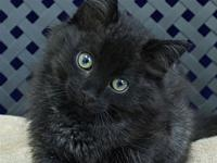 Blackjack's story Primary Color: Black Weight: 2.4 Age:
