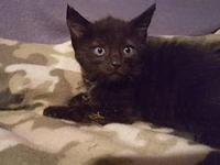 Blackjack - PENDING's story Sweet & Adventurous! Meet