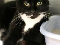 Blacky Chan *Petsmart GB*'s story 1 year old Domestic