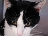 Blacky's story Two year old Blacky is FIV positive and