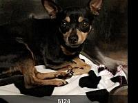 blacky's story At Wags and Whisker's Pet Rescue: