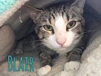 Blair's story BLAIR - neutered male, domestic