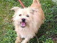 Blair's story Meet Blair, 5 yr old Female 20 lb Terrier