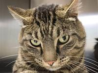 Blake's story Blake is neutered, front declawed and