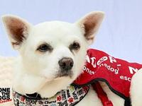 Blanca's story Blanca was a senior dog, overlooked at a
