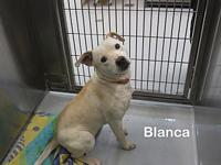 Blanca's story Need to add a wiggle worm to your life?