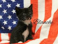 Blanche's story The adoption fee is $85.00 with an